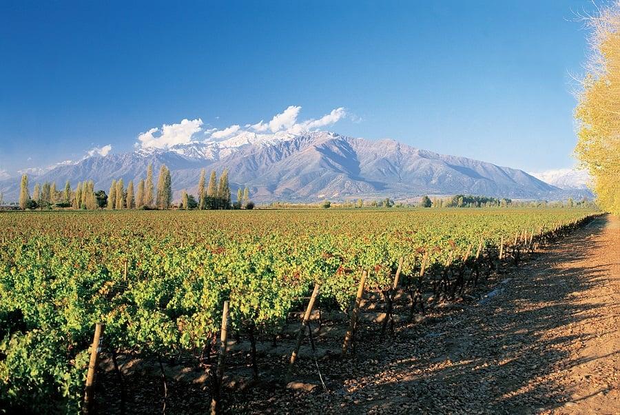 Fazer um passeio pelas vinícolas de Santiago do Chile