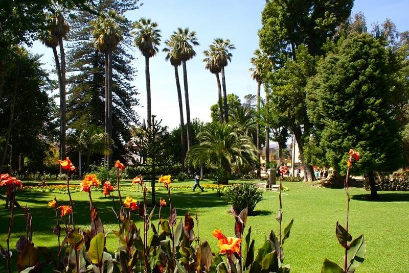 Passeio romântico no Parque Quinta Vergara em Viña del Mar