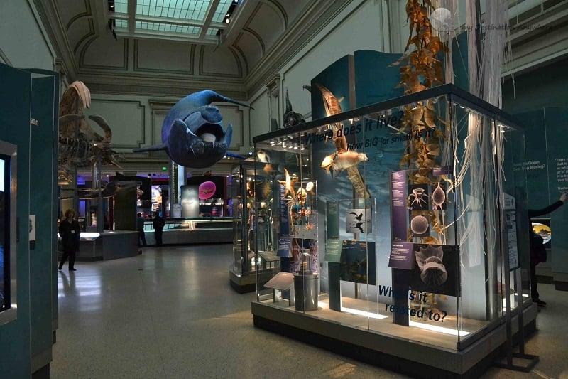 O que ver no Museu Nacional de História Natural